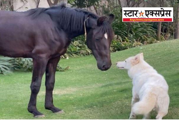 Photo of महेंद्र सिंह धोनी के घर मे नए मेहमान की एंट्री, जानिए कौन है नया मेहमान