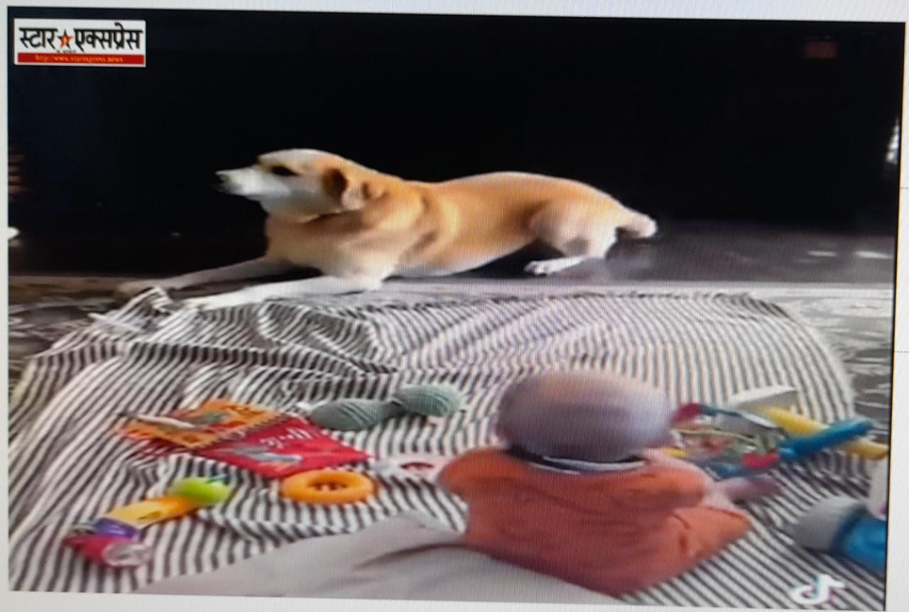 Photo of कुत्ते की हरकत देख खिलखिला उठा मासूम बच्चा, वायरल हुआ वीडियो