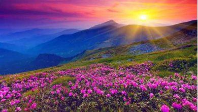 Photo of विश्व धरोहर फूलों की घाटी में पर्यटकों के पहुंचने का बना नया रिकॉर्ड